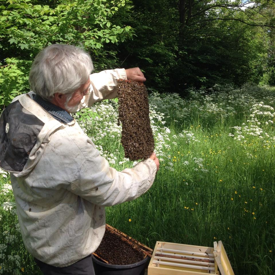 Inspectie bijenvolk Amsterdam-Nrd